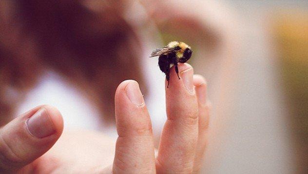 ухапване насекоми животни