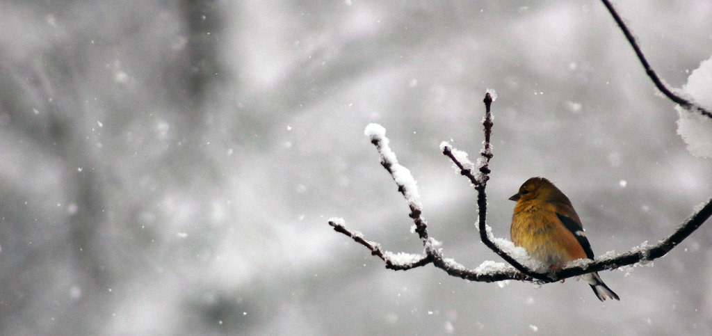 идеи за игри в снега птица