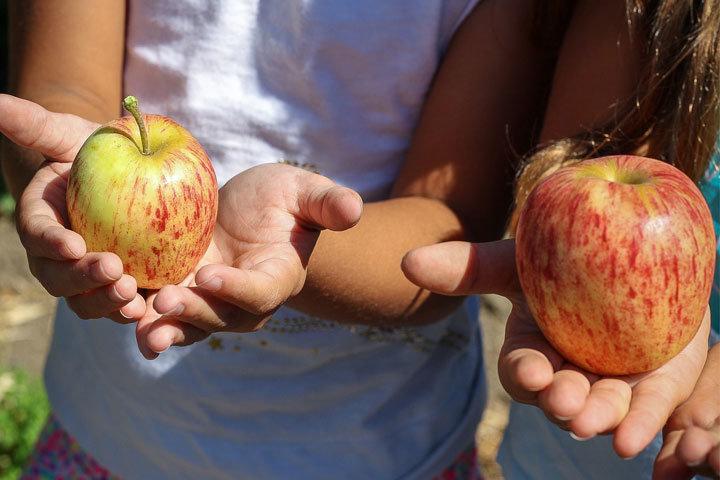 плодове деца